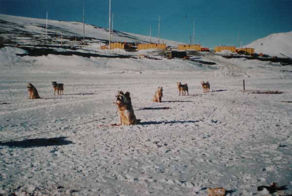 snow-dogs.jpg